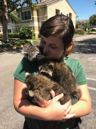 Palm Bay Wildlife Removal
